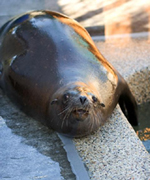 Photo of rescued sea lion